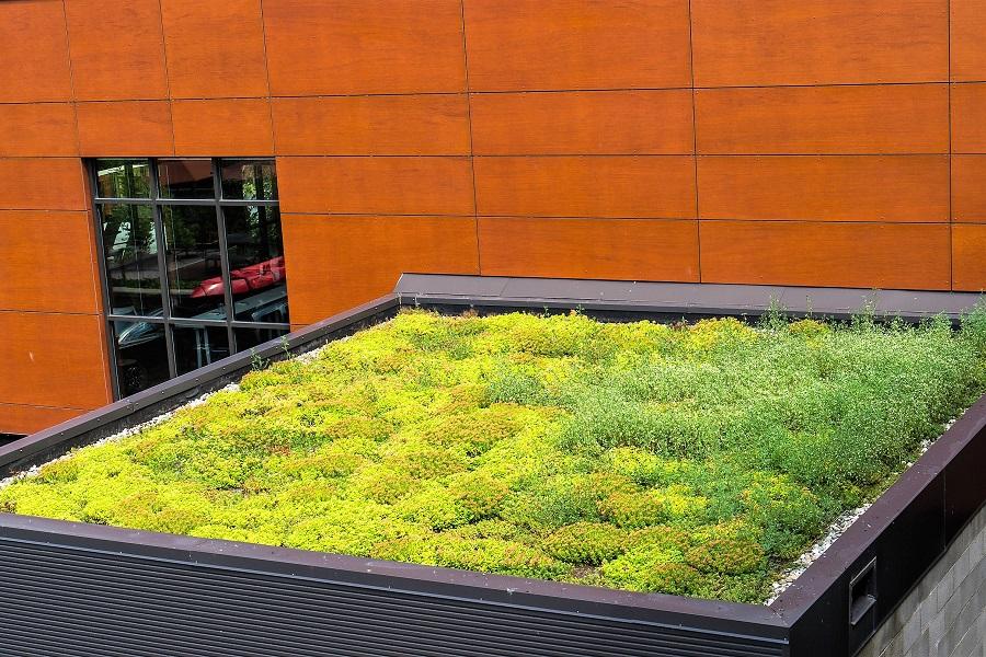 Neuhäuser Qualitätsdächer, Foto: Dachbegrünung